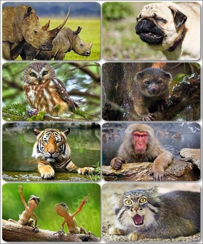 Funny Animals - Collection photo wallpapers (part 20)
