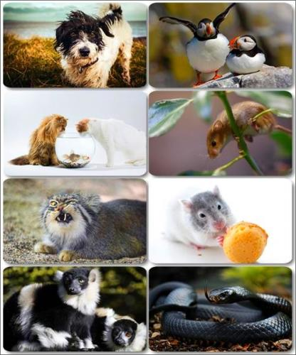 Funny Animals - Collection photo wallpapers (part 22)