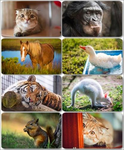 Funny Animals - Collection photo wallpapers (part 28)