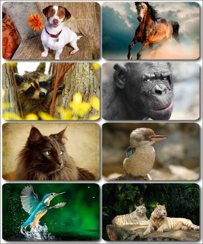 Funny Animals - Collection photo wallpapers (part 35)