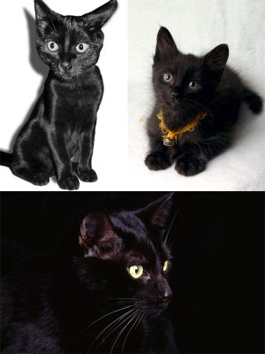 Black kittens (a selection of photos)