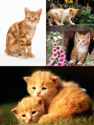 Red cats and kittens (a selection of photos)