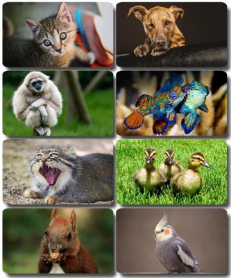 Funny Animals - Collection photo wallpapers (part 50)