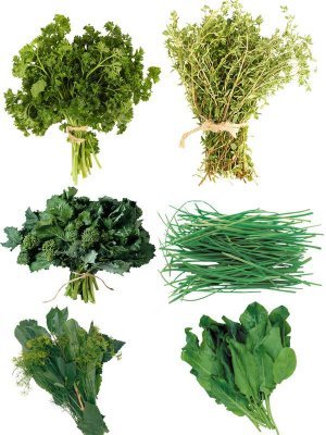 Photostock: herbs (dill, parsley, sorrel, etc.)