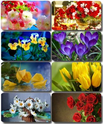 Floral Wallpaper - Collection photos of flowers (part 12)