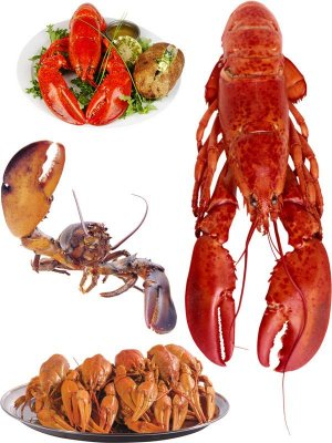 Photostock: cancers and lobsters