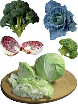 Photostock: cabbage (broccoli, brussels sprouts, cauliflower, etc.)
