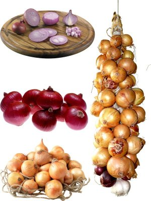 Photostock: vegetables - onions