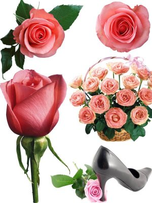Photostock flowers - pink roses (part two)