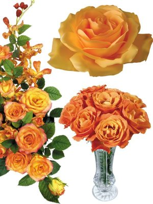Photostock flowers - orange roses