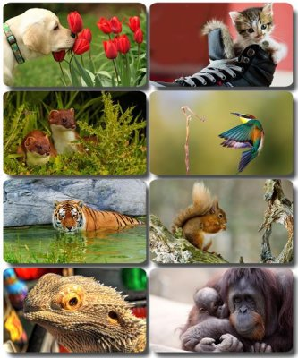 Funny Animals - Collection photo wallpapers (part 52)