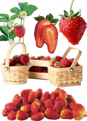 Photostock: berries - strawberries and strawberry