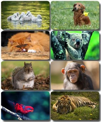 Funny Animals - Collection photo wallpapers (part 53)