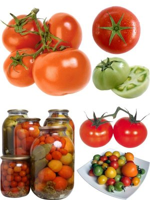 Photo stock vegetables: red and green tomatoes, fresh and salty