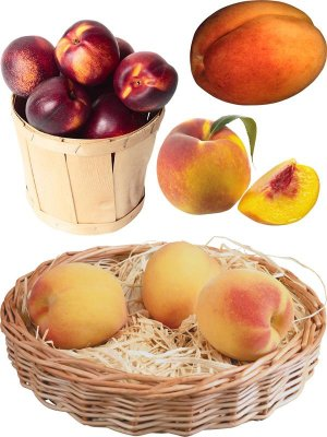 Photostock Fruit: apricots, peaches, nectarines