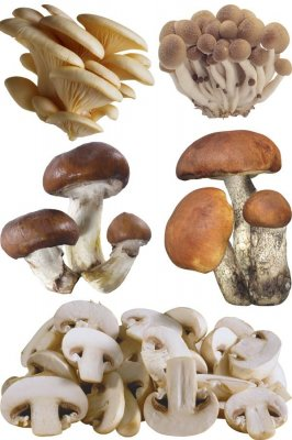 Mushrooms - a large collection of stock images