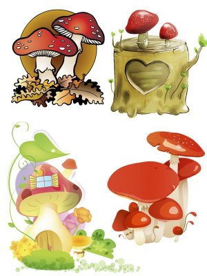 Pictures of mushrooms