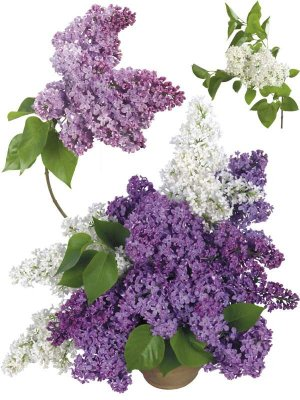 Lilac - flower photo stock