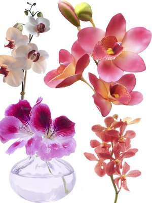 Orchid - flower photo stock (part two)