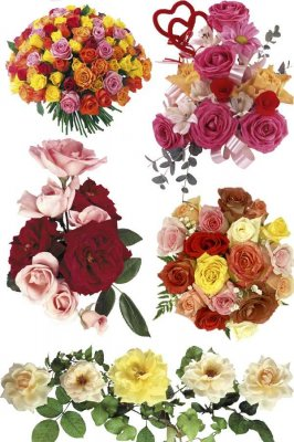 Roses - bouquets and flower arrangements (photo stock part one)