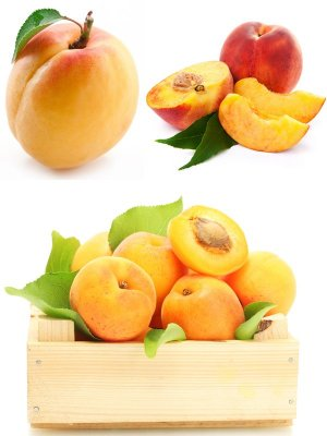 Apricot and peach (fruit collection of images)