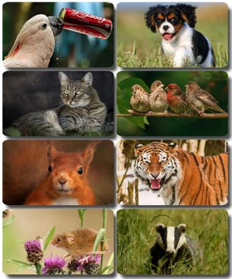 Funny Animals - Collection photo wallpapers (part 55)