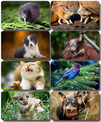 Funny Animals - Collection photo wallpapers (part 57)