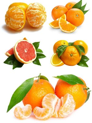 Orange and mandarin (Citrus collection of images)