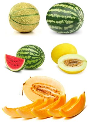 Juicy watermelon and sweet melon (the images)