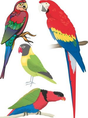 Stock Vector: birds - parrots