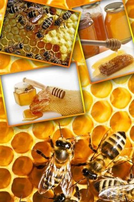 Honey, honeycomb, bees (the images)
