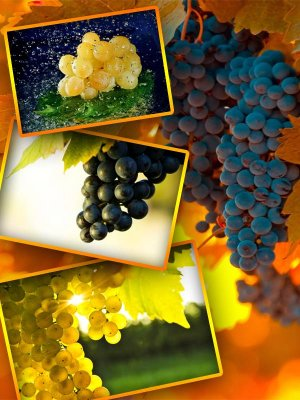 Photo stock: bunch of grapes