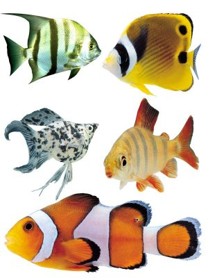 Underwater World: Aquarium fish (part two)