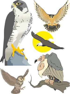Birds of prey vector (eagles, vultures, owls, etc.)