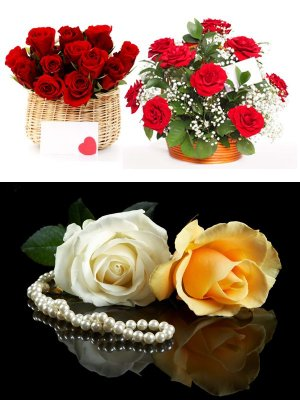Selection of images of beautiful roses