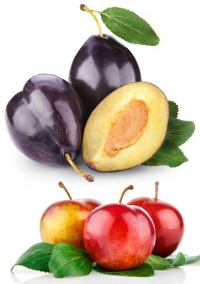 Fragrant plum (the images)