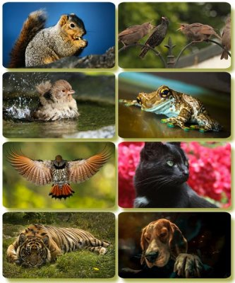 Funny Animals - Collection photo wallpapers (part 60)
