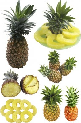 Pineapple and pineapple rings (transparent background)