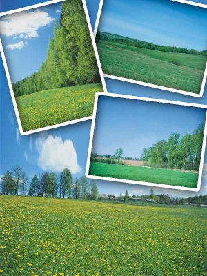 Nature: Fields and meadows (the images)