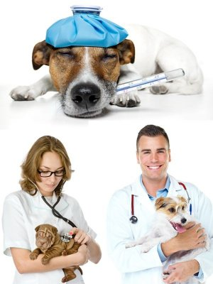 Veterinary medicine (the images)