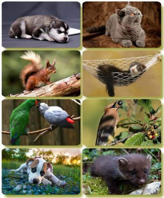 Funny Animals - Collection photo wallpapers (part 61)