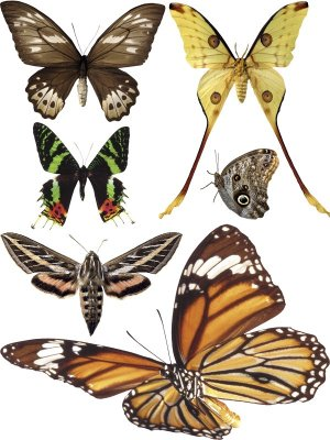 Insects: Butterflies and Moths (transparent background), the second part
