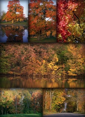 Autumn landscapes (the images)