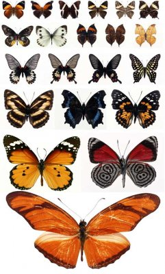 Butterflies and moths (a large collection of raster Clipart)