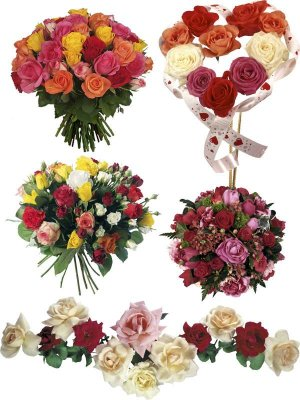 Bouquets of roses (mega collection of flowers)