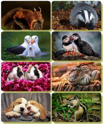 Funny Animals - Collection photo wallpapers (part 64)