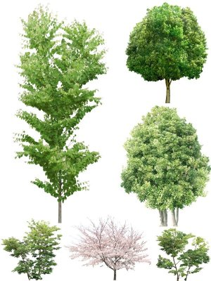 Large collection of trees on a transparent background (part one)