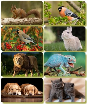 Funny Animals - Collection photo wallpapers (part 66)