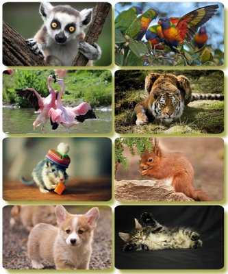 Funny Animals - Collection photo wallpapers (part 67)