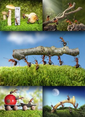 Industrious ants (the images)